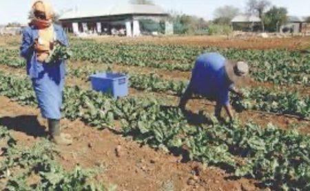 גיוס עובדים זרים לחקלאות
